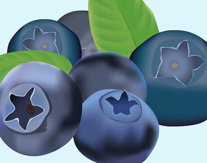 659x519-blueberries